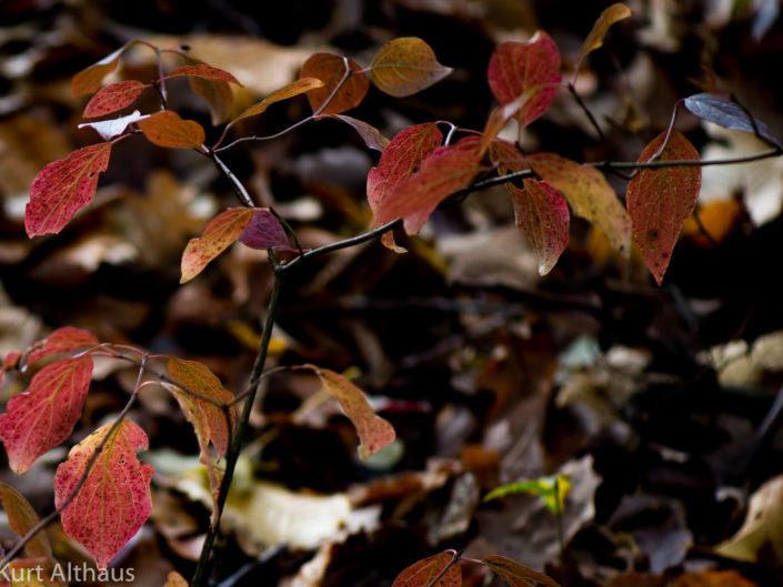 Herbstlicher Erliwald