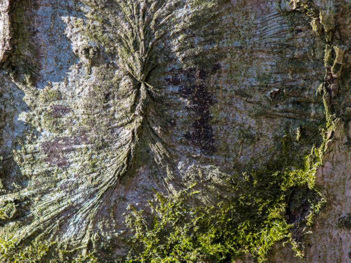 Baumlandschaft - Erli
