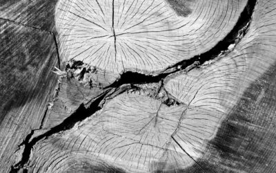 Holzlandschaften