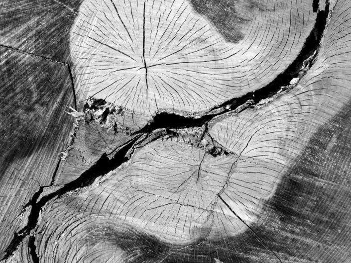 Holzlandschaften II - Erli